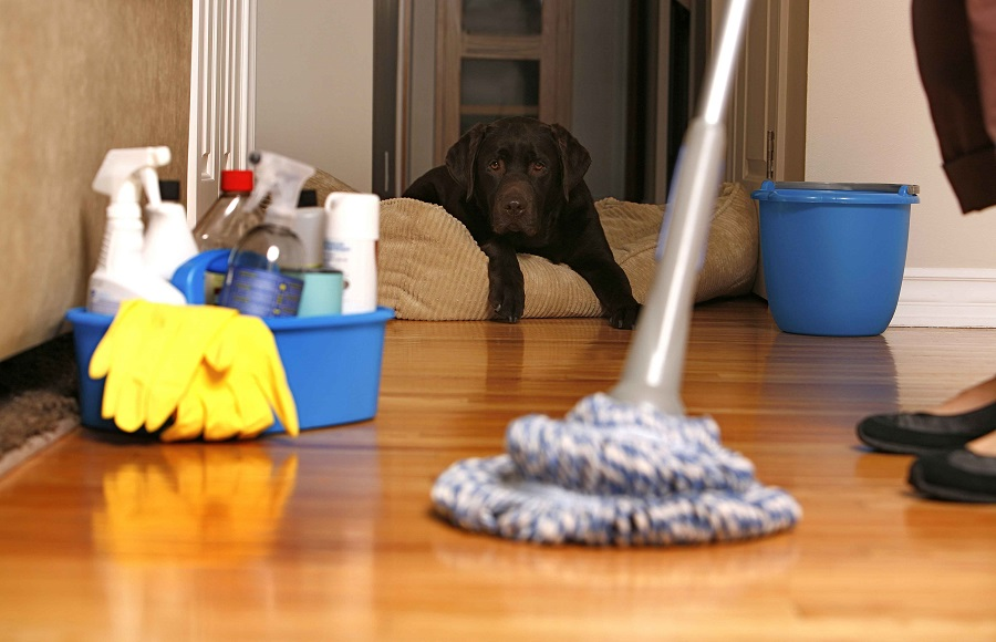 cleaning your carpets